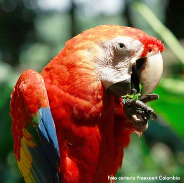 Plan de Turismo en Amazonas