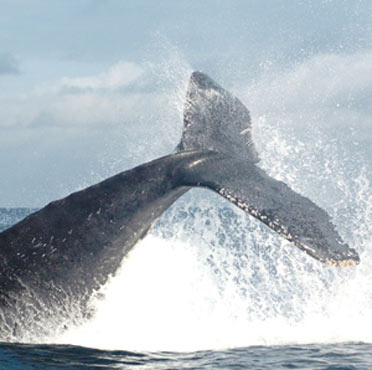 Whales in Ladrilleros 3 days